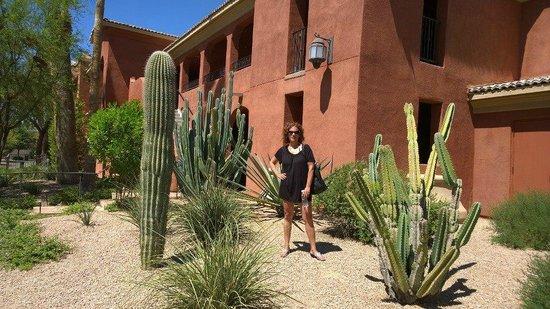 Omni Scottsdale Resort & Spa at Montelucia: Hotel gardens