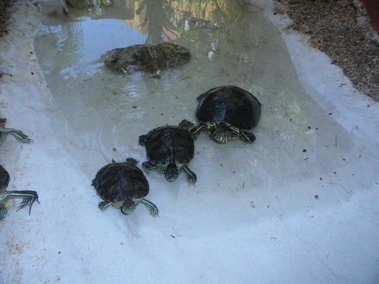El Acuario Hotel: en el jardin se encontraban estas tortuguitas acuaticas
