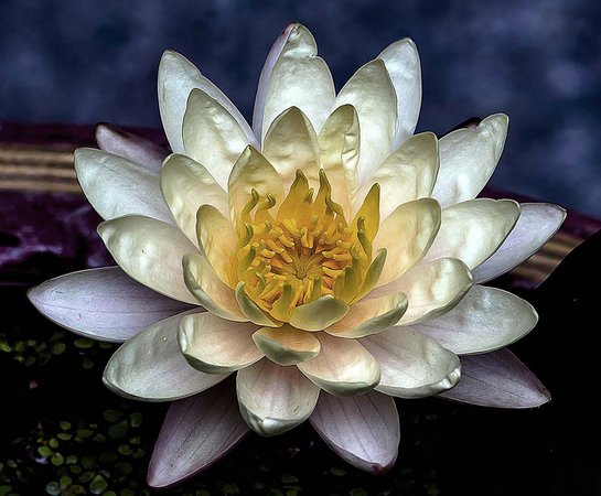 Legendha Sukhothai: Lotus in hotel river