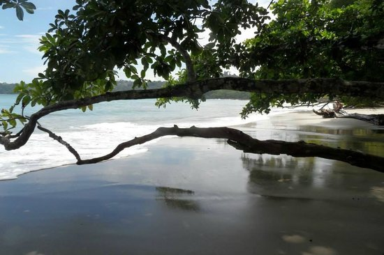 Hotel Costa Verde: Beach in Manuel Antonio National Park