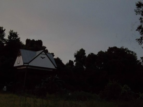 University of Florida Bat House: Bats leaving their roost shortly after sunset