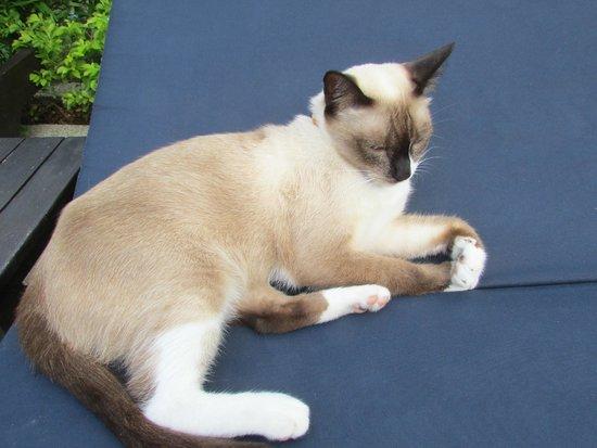 Bamboo Beach Hotel & Spa: 可愛的貓