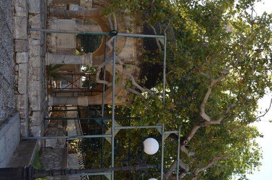 Hippocrates Tree: l'arbre d'Hippocrate
