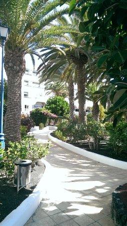 VIK Hotel San Antonio: Partie arborée du jardin vers plage