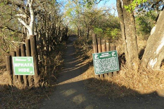 Mpila Camp : Entrance to Mphafa Hide