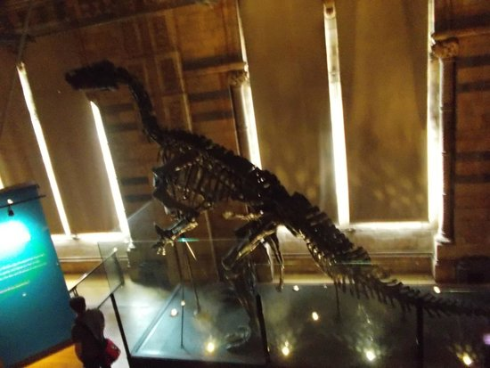 Natural History Museum: NHM