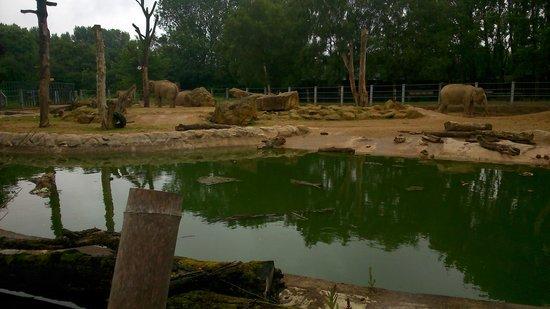 Twycross Zoo : elephants