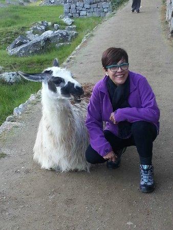 Eric Adventures : Sílvia com Lhama sorridente em Machu Picchu