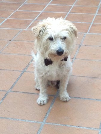 Camping Reina Isabel: Cute dog assisting in the restaurant.