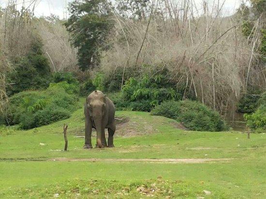 Bandipur National Park and Tiger Reserve: Ramesh Jain at Bandipur National park...