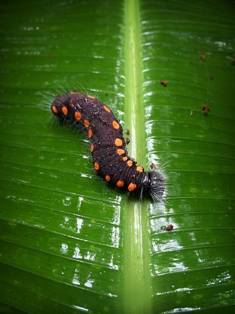 Selvatura Park: critters on the trail