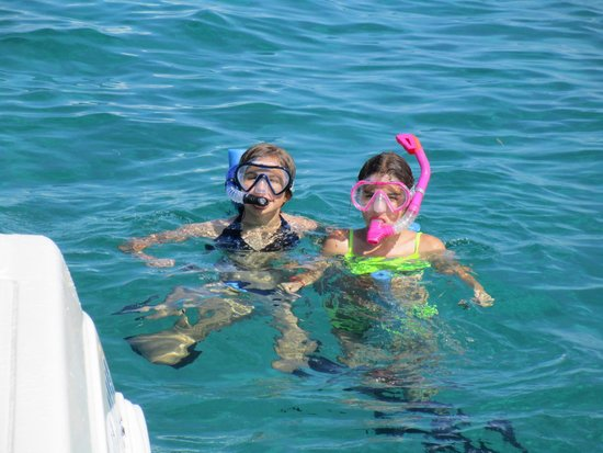 Wild About Dolphins: snorkeling fun