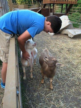 Rocking Horse Ranch Resort : Petting zoo