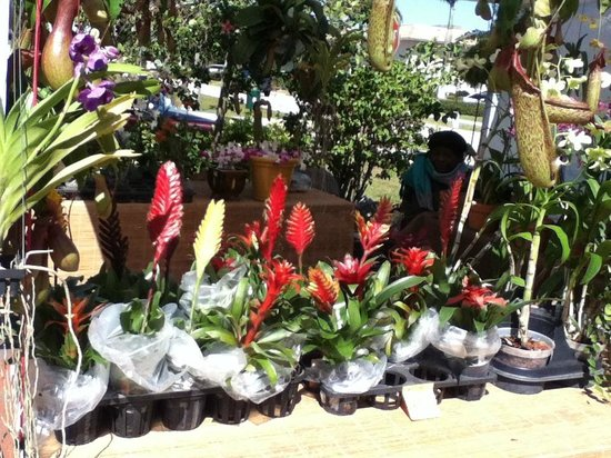 Flowers for sale at the Punta Gorda History Park Farmers' Market