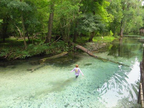 Blue Springs Park: walking in the run