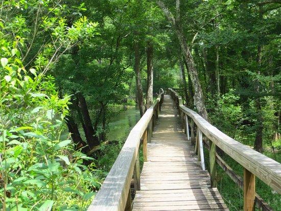 Blue Springs Park: boardwalk along Blue Springs run