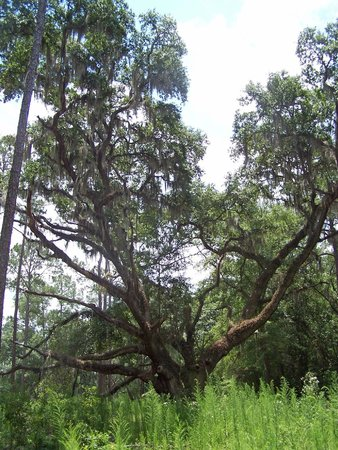 Big Shoals State Park: An entirely awesome tree. The park is loaded with such wonderful shapes.