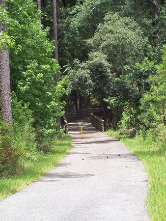 Big Shoals State Park: A shady respite from the Florida sun.