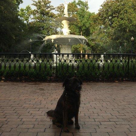 Savannah Historic District: One of Savannah's many beautiful squares