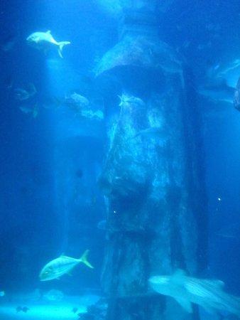 SEA LIFE London Aquarium: .