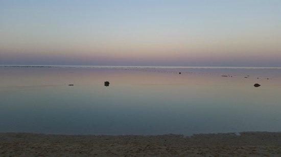 Blue Reef Red Sea Resort : idescrivibile
