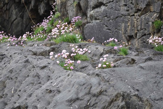 Inchydoney Beach: Small rock plants near the hotel