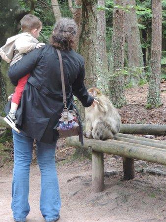 La Montagne des Singes : Montagne des singes