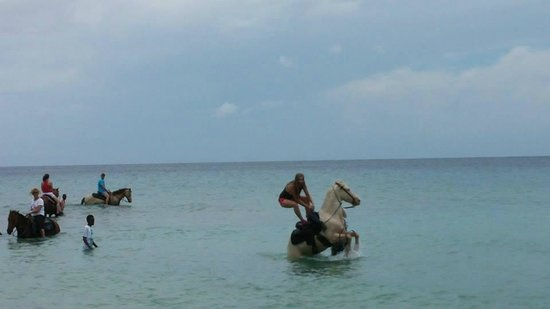 Equus Rides: this horse trained to rear and dumped my daughter into ocean!