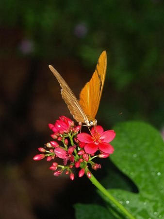 Key West Butterfly and Nature Conservatory: Beautfiul