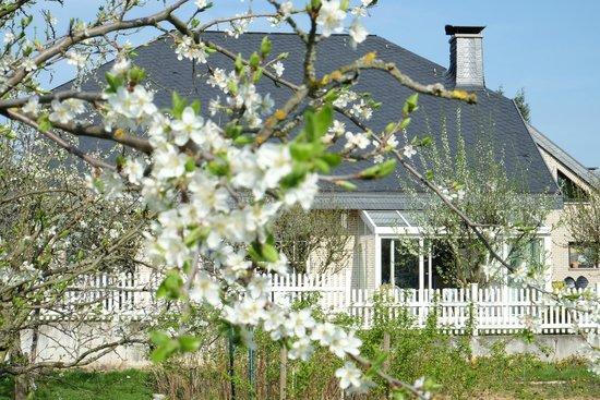 Villa Orchard amongst cherry blossoms