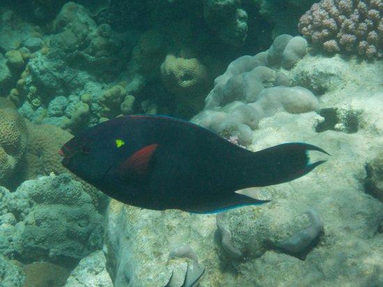 Coral Sea Sensatori - Sharm El Sheikh : SEA LIFE