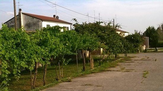 Otto Ducati d'Oro: Vineyard