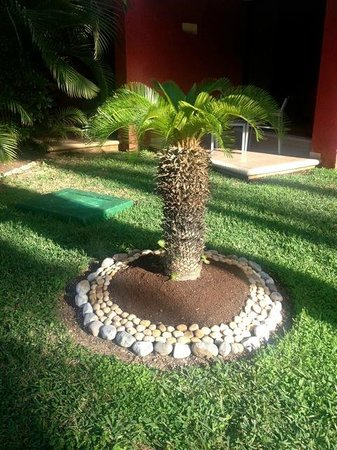 Temptation Cancun Resort.: Cute little palm on the resort grounds!