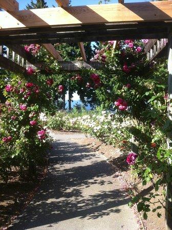 Horizons Restaurant: Rose Garden