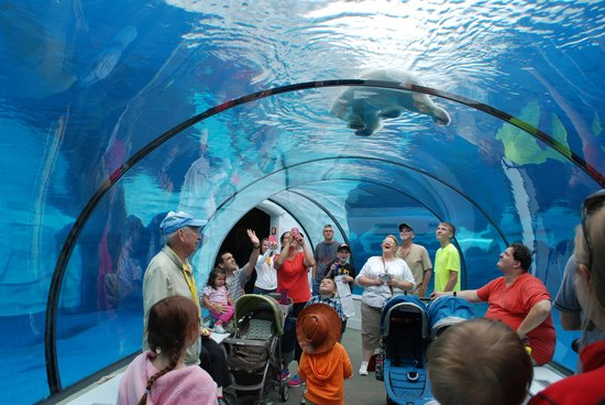 Detroit Zoo: Arctic Ring of Life