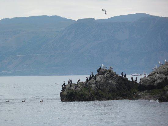 Seacoast Safaris: great trip to Puffin island