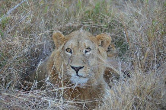 Camp Xakanaxa: Great game viewing including wonderful lion sighting