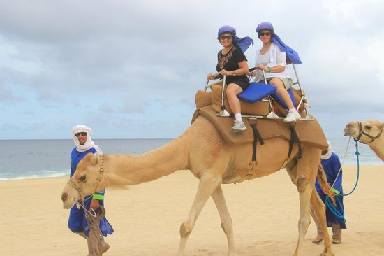 Outback & Camel Safari: SUCH A GOOD TIME GOOD VALUE THANKS DAVID FOR THE ECO TOUR