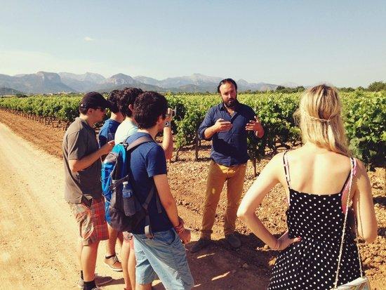 Mallorca Wine Tours: Julian doing his thing.