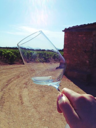 Mallorca Wine Tours: This wine came from the vines in the background.