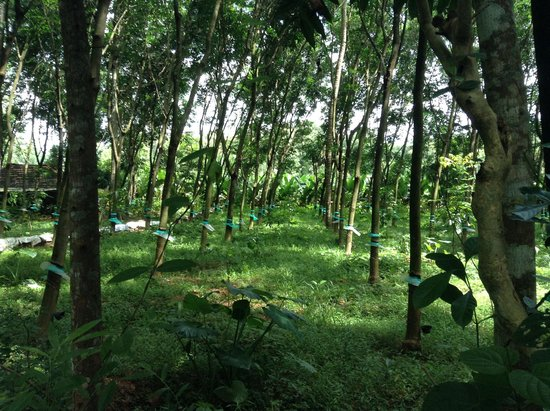 Yogalife Homestay: a short walk from the house