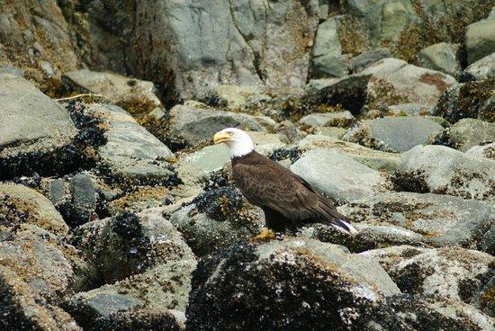 Eagle Eye Adventures: Bold eagle