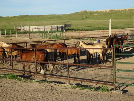 Colorado Cattle Company: Ready to saddle up!