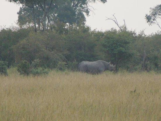 Mara Engai Wilderness Lodge: There be rhinos!