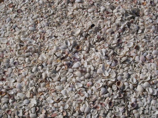 Sandalfoot Condominium: Shells galore