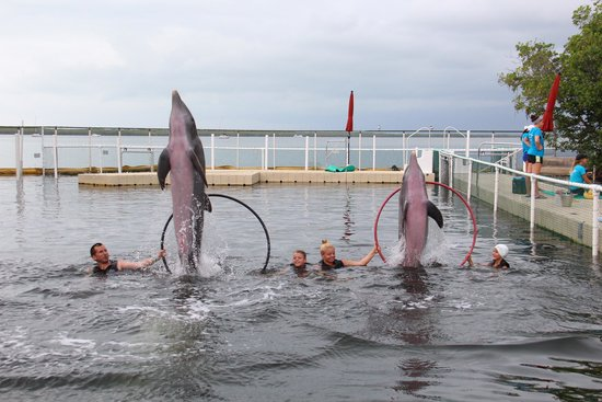 Dolphins Plus Bayside: Dolphins Leaping out of the water