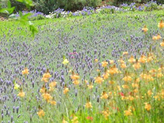 Gramados lindos picture of le jardin parque de for Jardines de lavanda