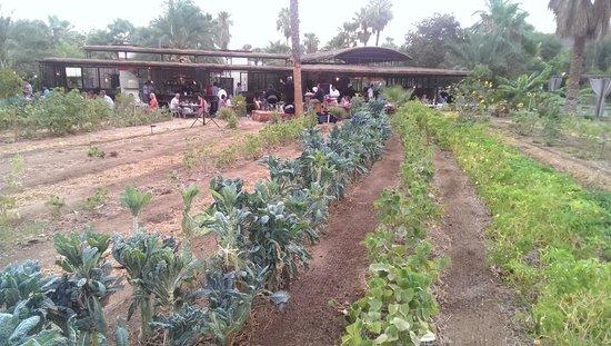 Flora's Field Kitchen : Restaurant view