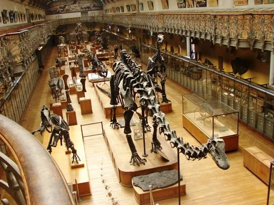 Pictures Of Museaum Of Natural History In The  S