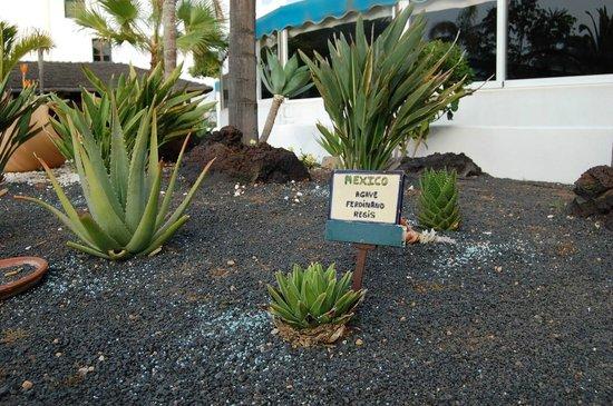 Blue Sea Costa Bastian: Plantas Internacionais